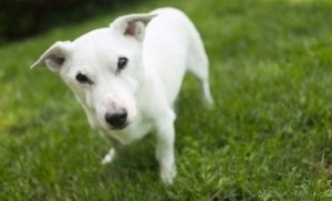 Help prevent fleas and ticks on your dog this summer