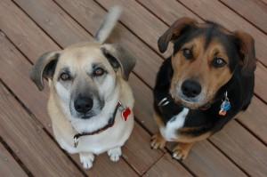 Pet food and pet treat recalls continue at an alarming rate