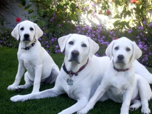 Does Your Pet Need Sunscreen Pet Meds News