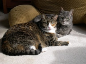 Aflatoxins and corn-based cat litter