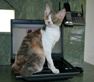 Keyboard Cats: Why are cats drawn to the computer keyboard?