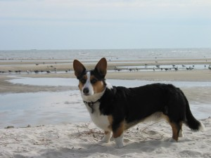 Fun in the sun: safety tips for the dog beach