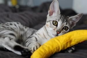 Alternatives to catnip
