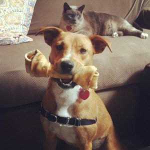 Helpful and fun smartphone apps for pet lovers