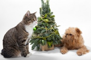 Christmas trees and pets—a safety checklist
