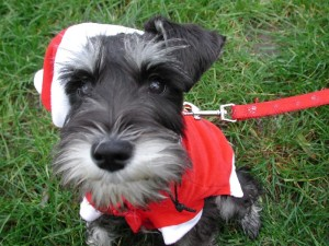 Keep your pets calm and safe during the holiday hubbub