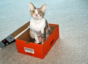 It's your cat's favorite holiday: Boxing Day!