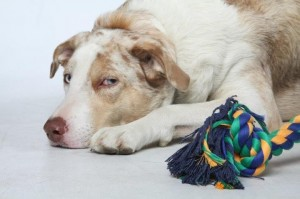 How to select safe toys for your dog or cat