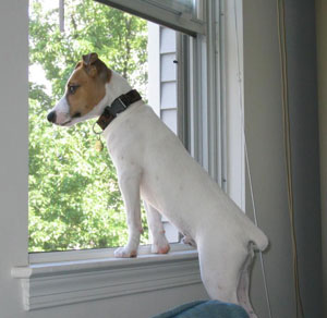 Tips to finding a reliable pet sitter