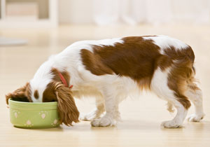"What does giving your pet ""healthy"" food really mean?"