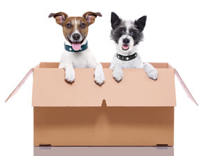 5 moving tips for pet parents