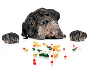 How to prevent accidental pet poisoning