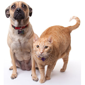 Is your pet at risk for diabetes?