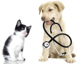 New American Heartworm Society guidelines you should know