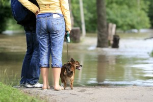 Prepare now for your pet's safety in case of a disaster