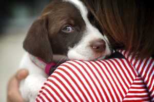 4 natural ways to soothe an anxious dog or cat