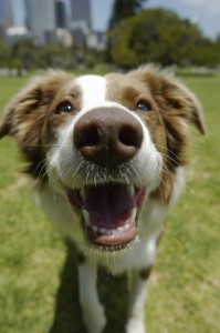 What's an epulis? Learn about a common oral growth in dogs