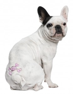 New York lawmakers pass bill making it illegal to tattoo or pierce your pet