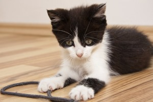 Avoid these unsafe cat toys