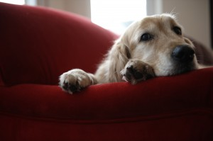 Urinary incontinence in pets: causes and treatments