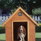 July is National Doghouse Repair Month