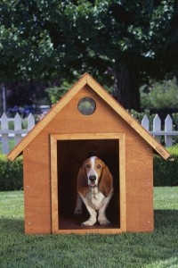 Does your dog need a doghouse?