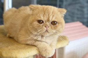 The race to open the first cat café in the US