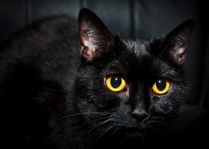 Selfies: more bad luck for black cats