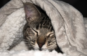 Managing your cat's chronic viral illness