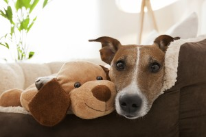 What are the signs that my dog or cat might be sick?