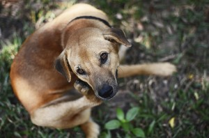 Could your dog's hair loss and itchiness be caused by mange?