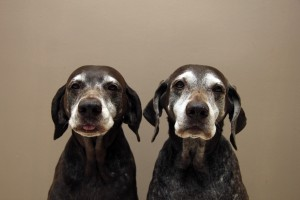 What you can do to keep your senior pet healthy