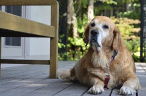 My pet was just diagnosed with cancer–what do I do now?