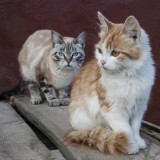 Cats allowed outside are more likely to get into fights which can lead to abscesses