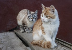 Treatment options for your cat's abscess
