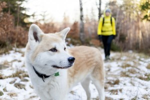 Revealed: How to make 2015 your pet's healthiest year