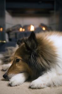 Carbon monoxide poisoning—could your pet be at risk?