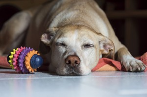 Caution! Read this before giving aspirin to your dog
