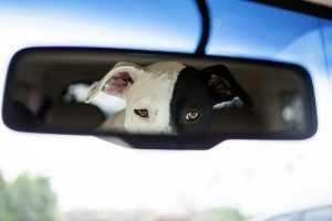 Cure your pet's motion sickness for the best road trip, ever